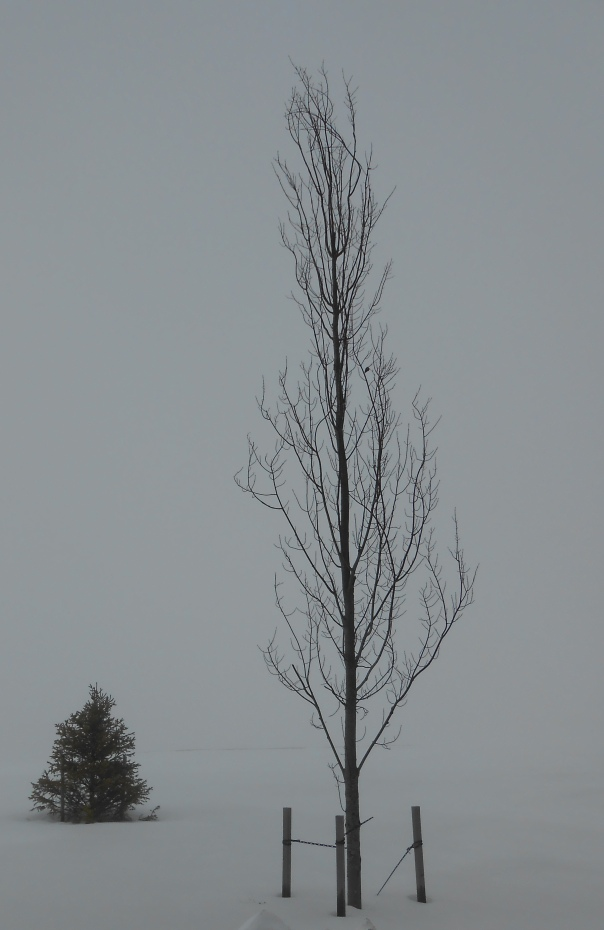 """This is the photo, called """"Quiet Winter Rollinsford 2"""" that provided the basis for the watercolor."""