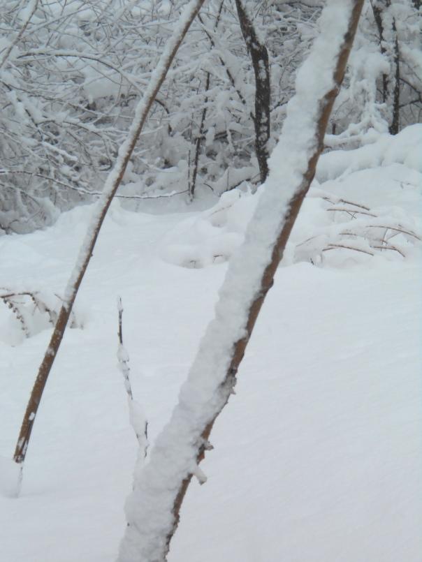 Leaning Trees 1, digital photo, (c)Daryl-Ann Dartt Hurst, 2013
